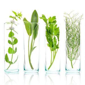 1- Módulo Naturopatía Integral especialidad Nutrición