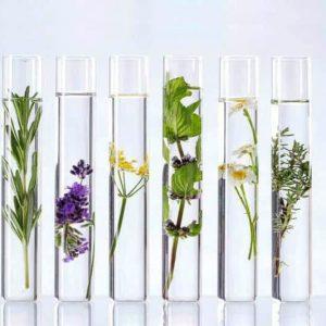 2- Módulo Naturopatía Integral especialidad Nutrición
